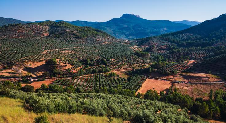 Campos de olivos y serranía andaluza, localizada al sureste del Valle de Alcudia